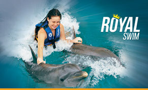 yates mas royal swim con delfines